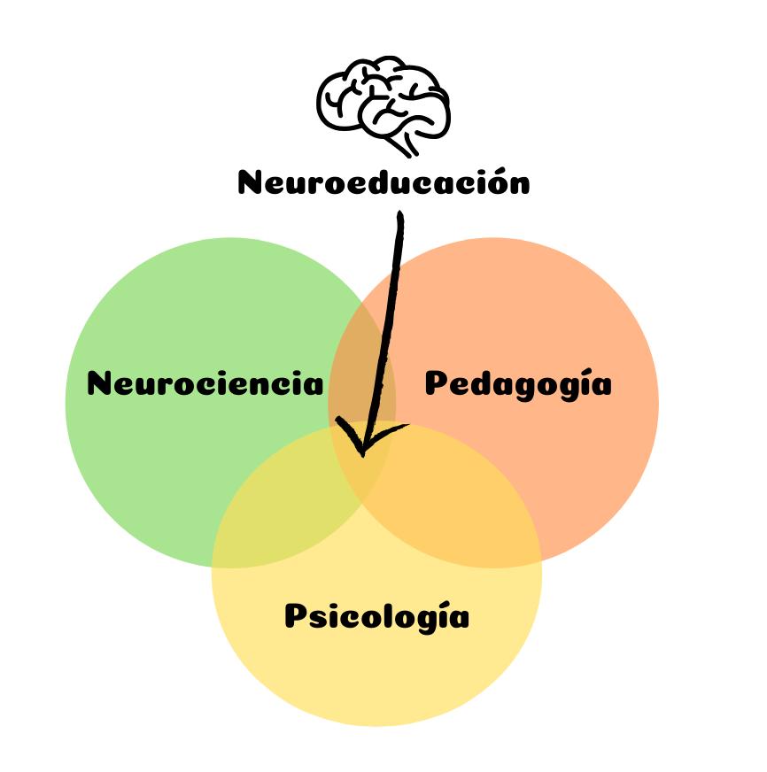 2.3. NEUROEDUCACIÓN